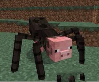 我的世界蜘猪怎么样 我的世界蜘蛛猪怎么驯服图片
