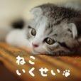 治愈猫猫育成3D